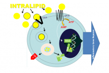 Intralipid diagram 3