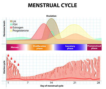 classic clinical findings of menstrual cycle abnormalities inciid. Black Bedroom Furniture Sets. Home Design Ideas